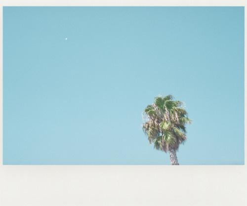 Jef Claes / heat #palm #jef #heat #claes #blue