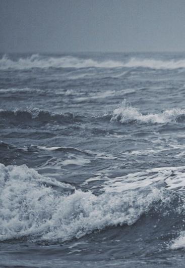 arborvitae #photo #water