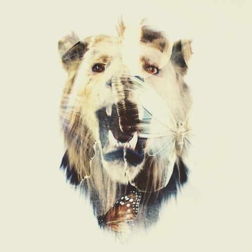 Tumblr #animal