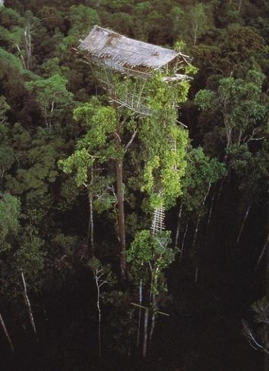 je suis perdu #house #tree #trees #fort