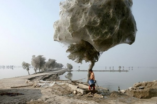 pakistan-floods-drive-spiders-into-trees-children_34027_600x450.jpg (600×401) #spider #tree #pakistan