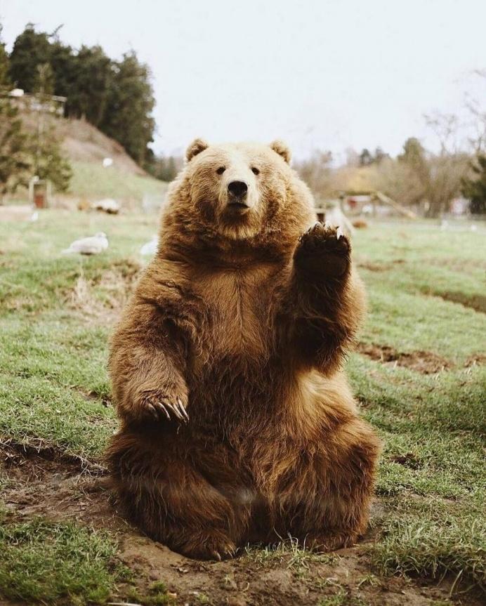 Oh Hi Bear 🐻