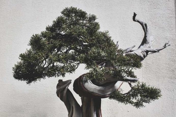 Stephen Voss Captures The True Beauty of Bonsai Trees