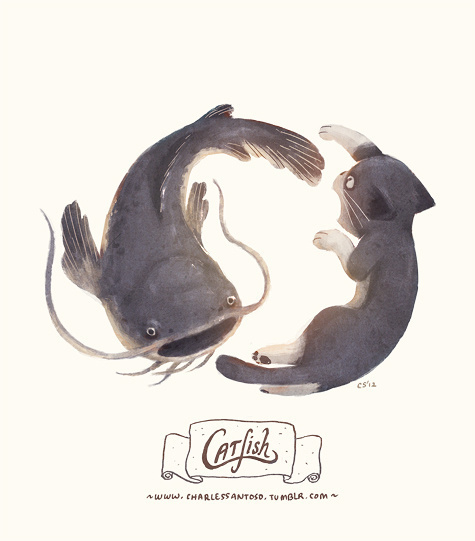Catfish #inspiration #illustration #catfish