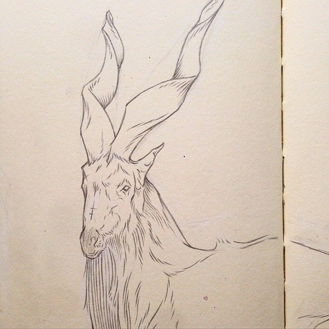 Antilope, Micheal Hanly, Pencil, Drawing