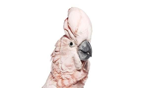 Birds   The Bird Book #pink #photo #bird