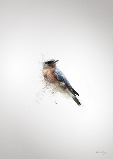 RVLVR X GRAPHICS DESIGNED (In progress) | Flickr - Photo Sharing! #birds #design #graphic