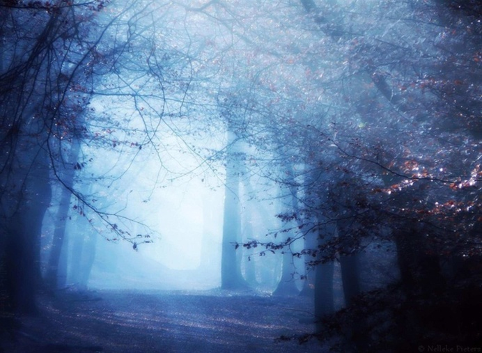 Mysterious Trees In A Dutch Forest by Nelleke Pieters