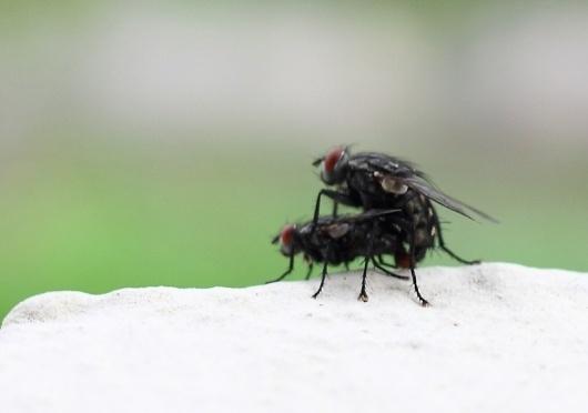 Pills : Maurizio Di Iorio Photography #sex #flies #photograph