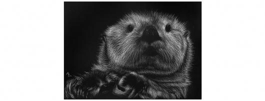 Allison B. Design - Portfolio Website #otter #white #scratch #board #black #illustration