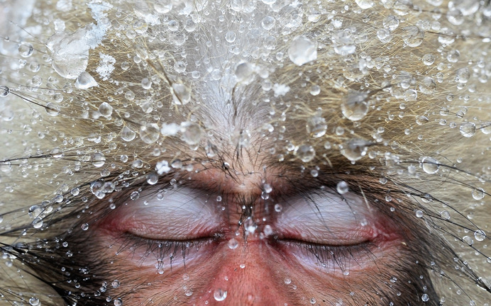 Jasper Doest Photography - Awards #water #sleep #monkey #fur #calm #primate #photography #macaque #ice #peace #animal #rest #beauty