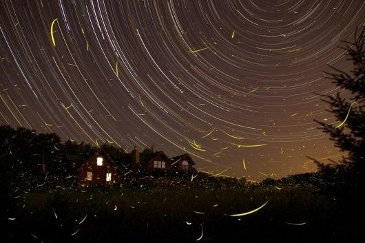 FirefliesStartrails_rosinski.jpg 2048×1365 pixels #exposure #night #star #time #fireflies #trails