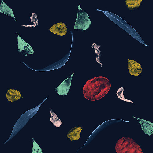 AM/GD #spartak #seeds #petals #leaves