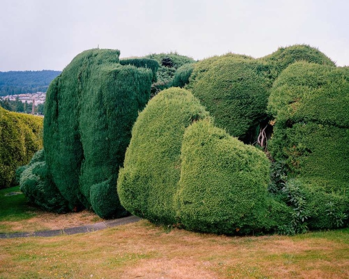 California Topiaries by Marc Alcock