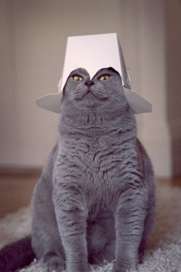 east of eden #chinese #cat #food #grey