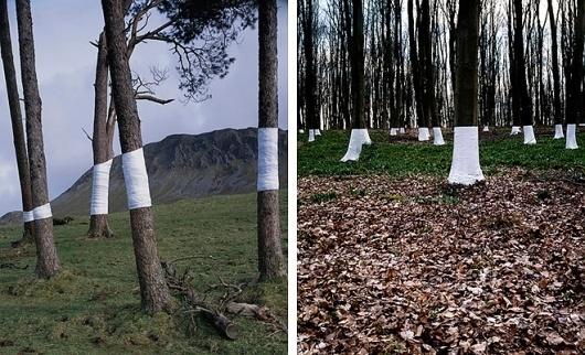 HUH. Magazine - Tree, Line #line #paper #trees #tree