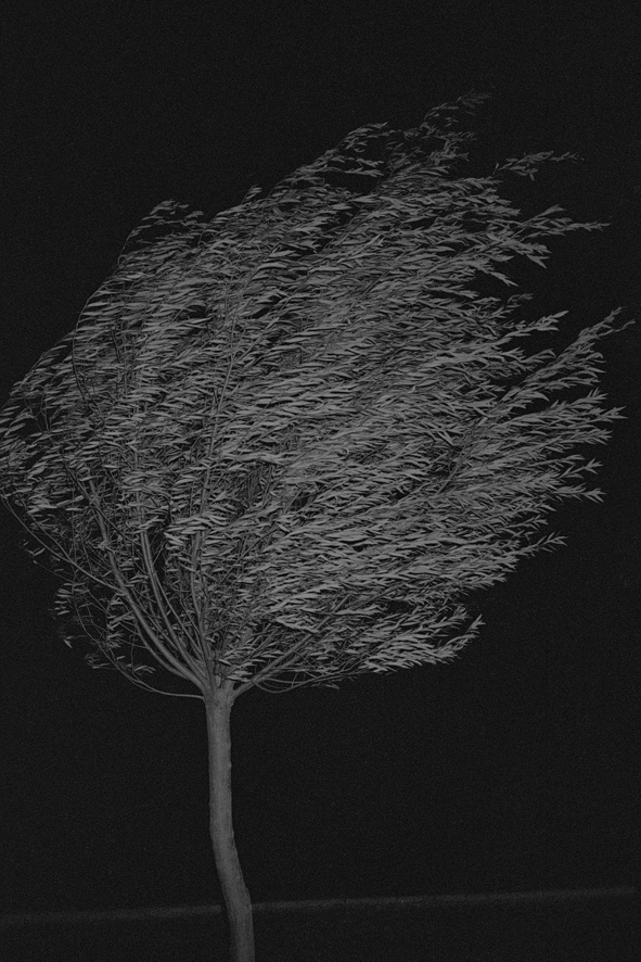 Thinking images : Photo #wind #tree #b&w #photography #blown
