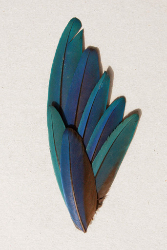butdoesitfloat.com Images #feather #bird