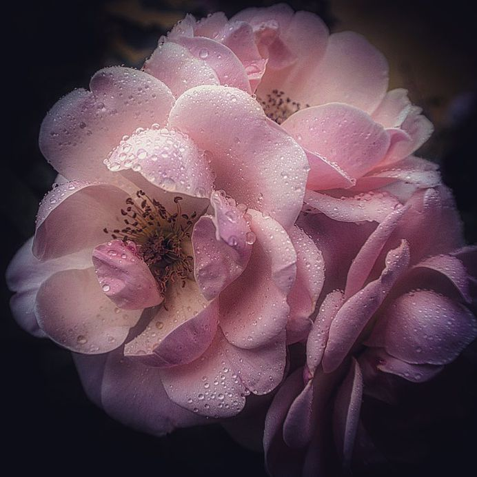 Breathtaking Beauty of Flowers: Close-Up Photography by Anne Wehner