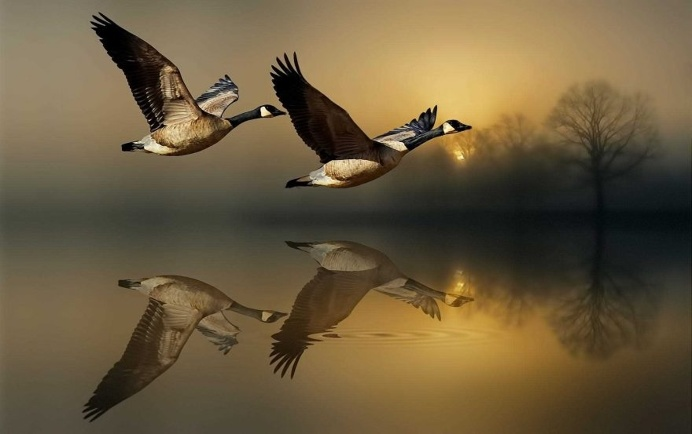 Dreamlike Animals Photography by Nasser Osman