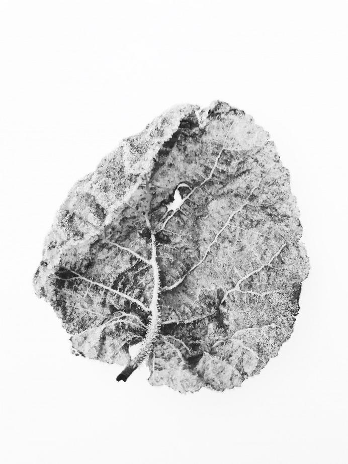 #frozen #leaf