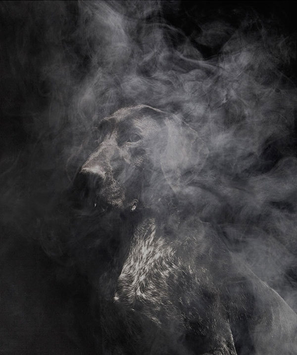 Faith is Torment | Art and Design Blog: Nice To Meet You: Photos by Martin Usborne #animal #photography #portrait #smoke #dog #darkness