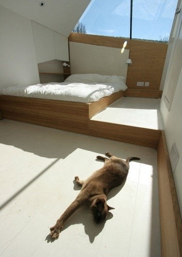 atmosstudio #architecture #cat