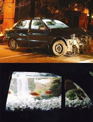 I need a guide: myeongbeom kim #myeongbeom #car #kim #fishtank