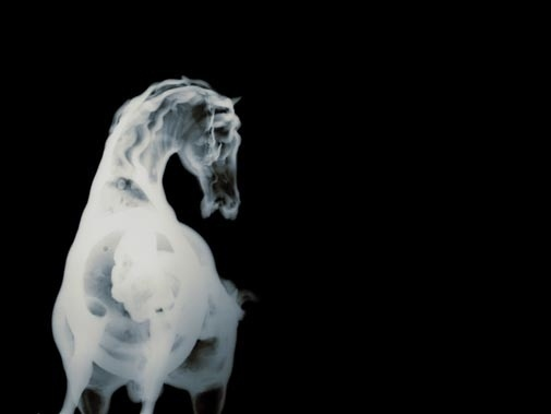 his_gr1_m_02.jpg 505×379 pixels #ray #bones #horse