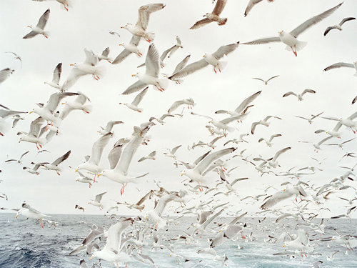birds #seagul #water #air #seagull #birds #photography #sea #nature