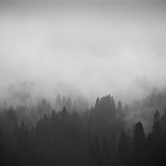 Dark forests on Photography Served #photography #landscape