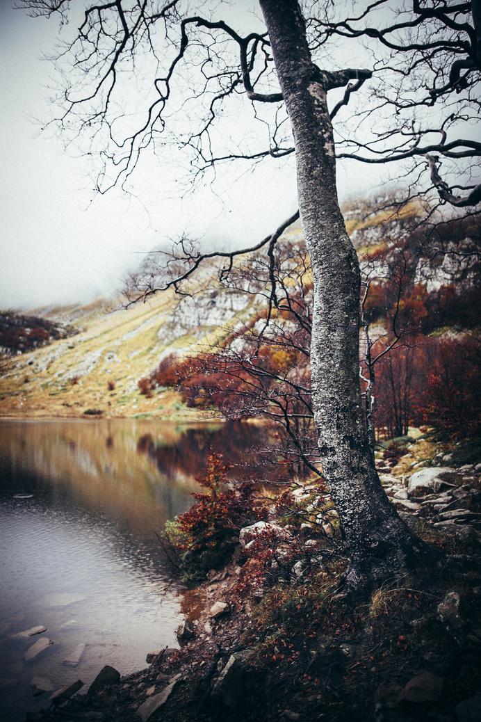 (2) Likes | Tumblr #autumn #old #river #tree