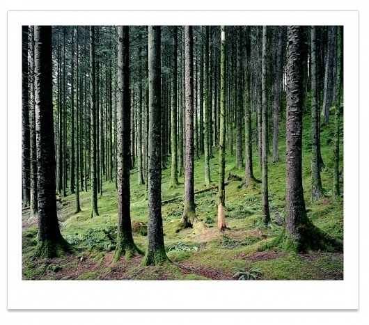 Prints : Guy Sargent #forest #photograph