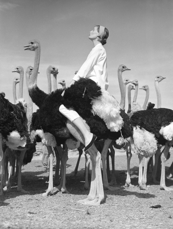 Norman Parkinson - Wenda and Ostriches - Photos - Photohab - Photographer's Portfolios #fashion #photography #inspiration