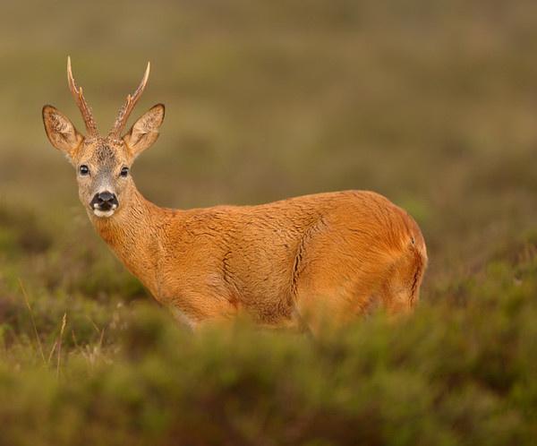 Wildlife Photography by Edwin Kats #inspiration #wildlife #photography