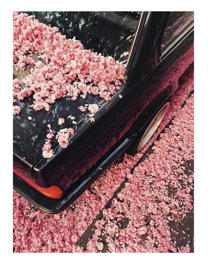 #flower #car PHOTOGRAPHIE © [ catrin mackowski ]