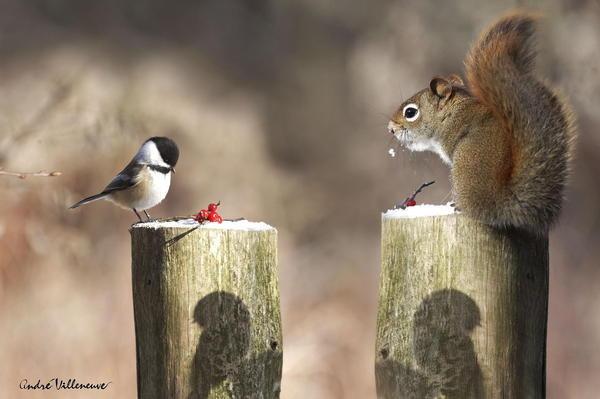 We share? #& #squirrel #bird