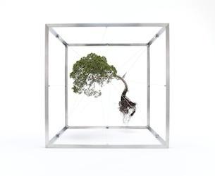 2011 shiki1 #plants