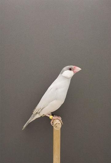 iainclaridge.net #minimalistic #bird