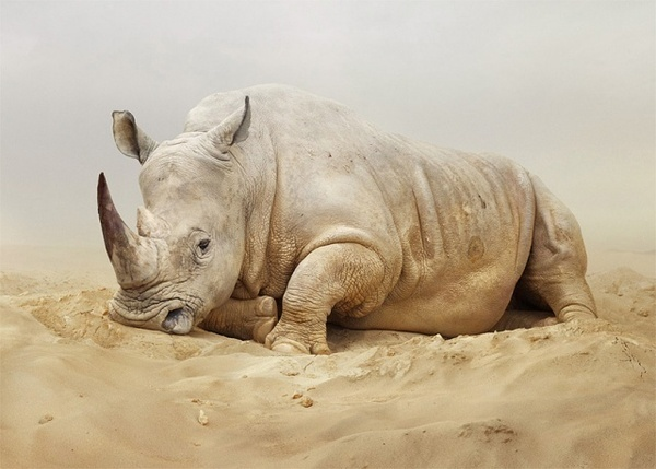 Animals Photography by Simen Johan #inspiration #photography #animals