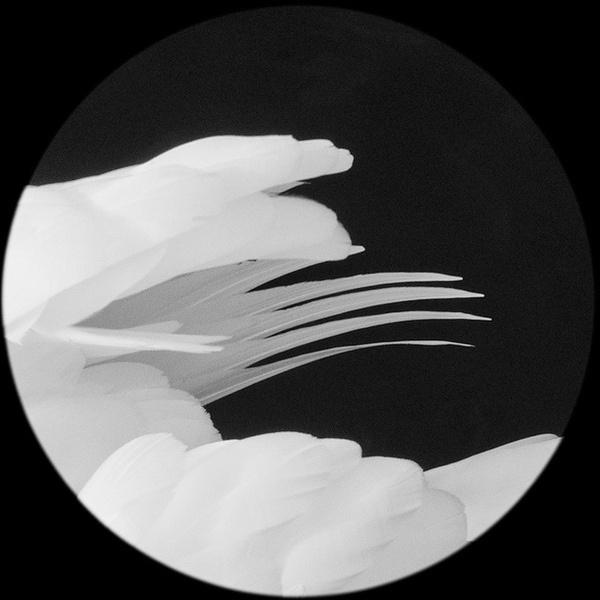 by tokioshi #white #bw #feathers