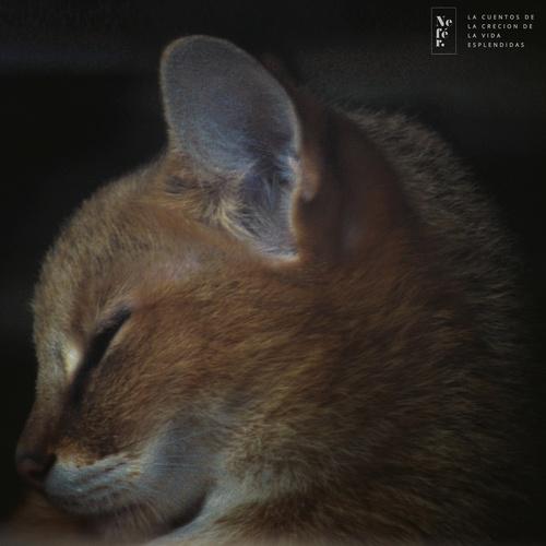 #cat #sleep #photo #face #animal #eye #love
