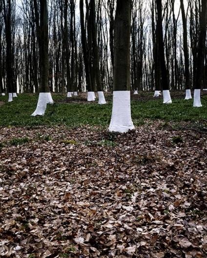 Zander Olsen's Tree Line Project | Trendland: Fashion Blog & Trend Magazine #photography #illusion #installation