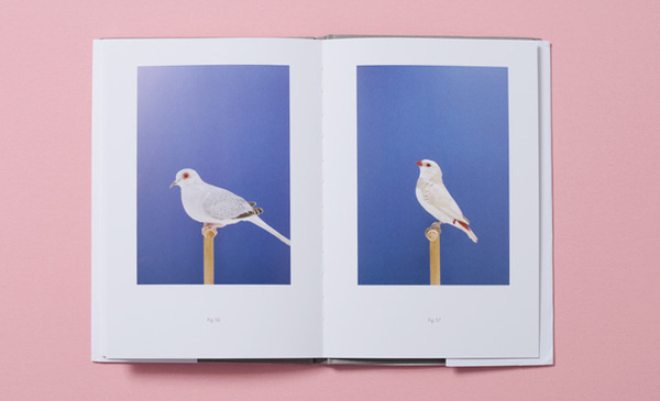 'An Incomplete Dictionary of Show Birds' by Luke Stephenson | Art | Wallpaper* Magazine: design, interiors, architecture, fashion, art #birds #colorful #magazine