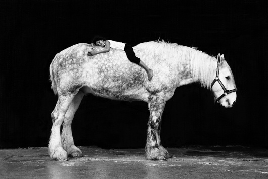Sara Bourke's blog | Nöjesguiden #horse #white #black #and