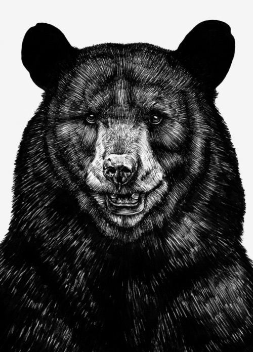 Sebastian Gomez de la Torre #grizzly #bear #illustration #drawing