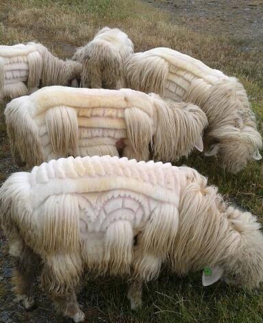 sheep patterns