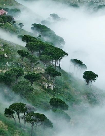 tumblr_m2g8o9kgoq1qzkgllo1_1280.jpg (592×767) #trees