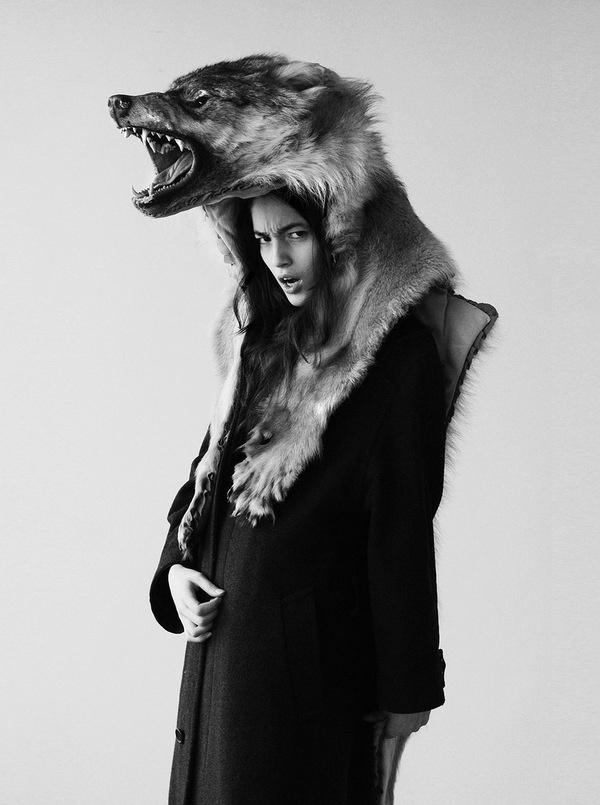 Zoom Photo #wolf