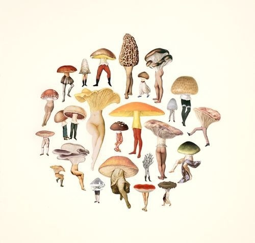 amy ross #mushroom #body #illustration #creatures #pixies #collage